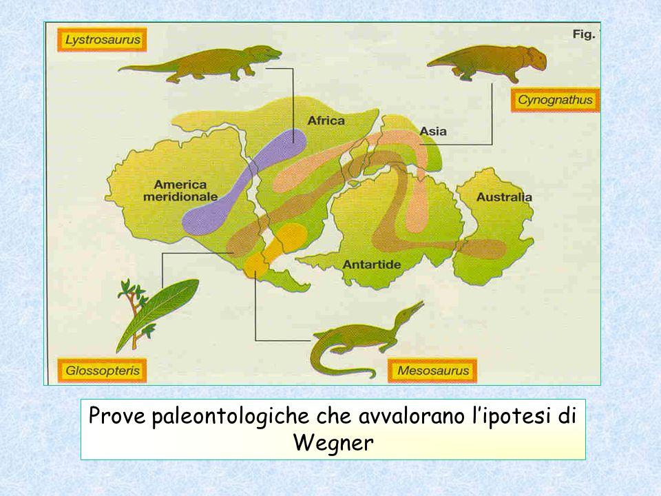 \ Prove paleontologiche che avvalorano lipotesi di Wegner