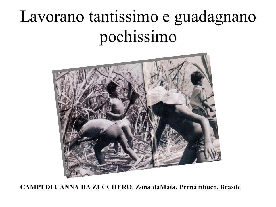 Lavorano tantissimo e guadagnano pochissimo CAMPI DI CANNA DA ZUCCHERO, Zona daMata, Pernambuco, Brasile