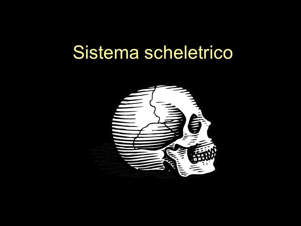 Il sistema scheletrico Definizione: –Tutte le ossa, le cartilagini e le articolazioni del corpo