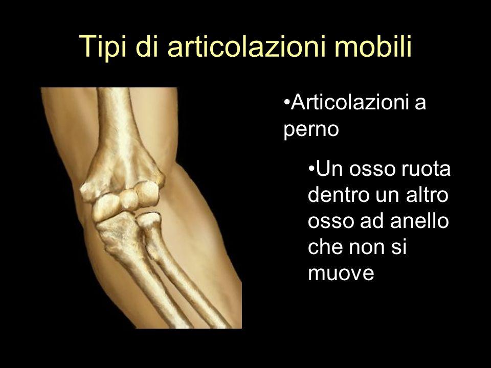 Tipi di articolazioni mobili Articolazioni a perno Un osso ruota dentro un altro osso ad anello che non si muove