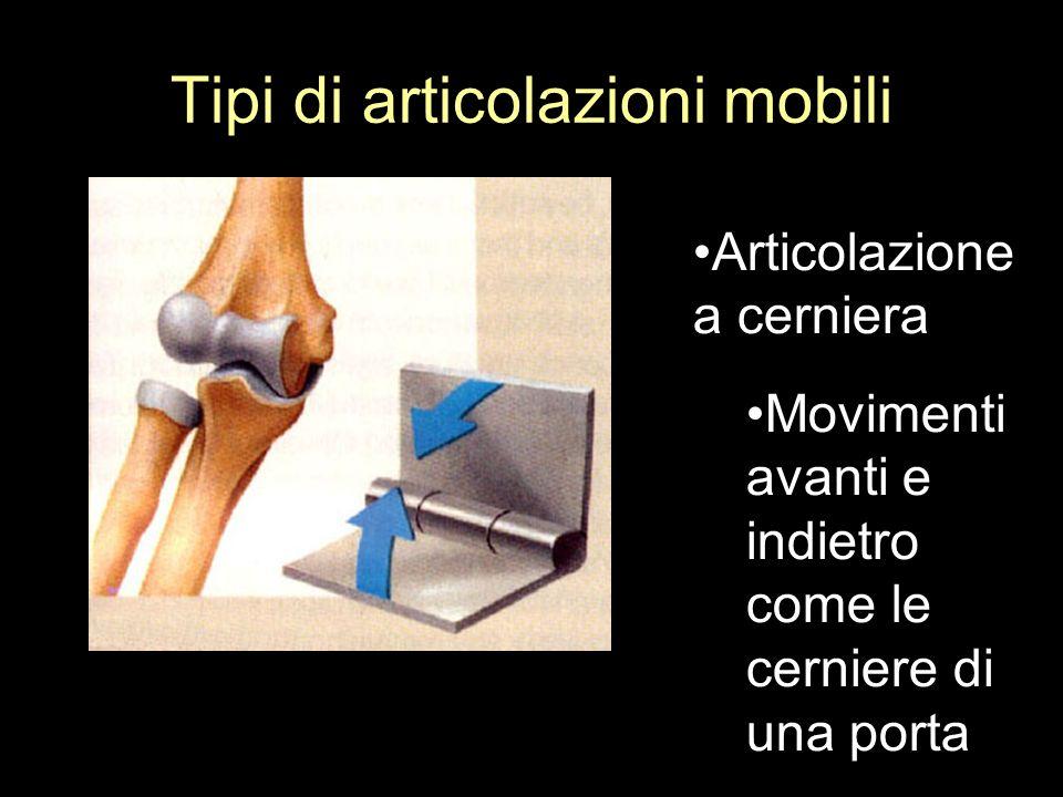 Tipi di articolazioni mobili Articolazione a cerniera Movimenti avanti e indietro come le cerniere di una porta