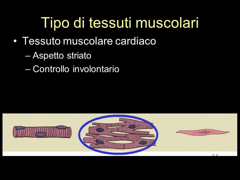 Tipo di tessuti muscolari Tessuto muscolare cardiaco –Aspetto striato –Controllo involontario