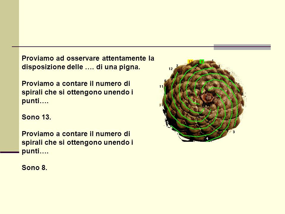 Proviamo ad osservare attentamente la disposizione delle …. di una pigna. Proviamo a contare il numero di spirali che si ottengono unendo i punti…. So