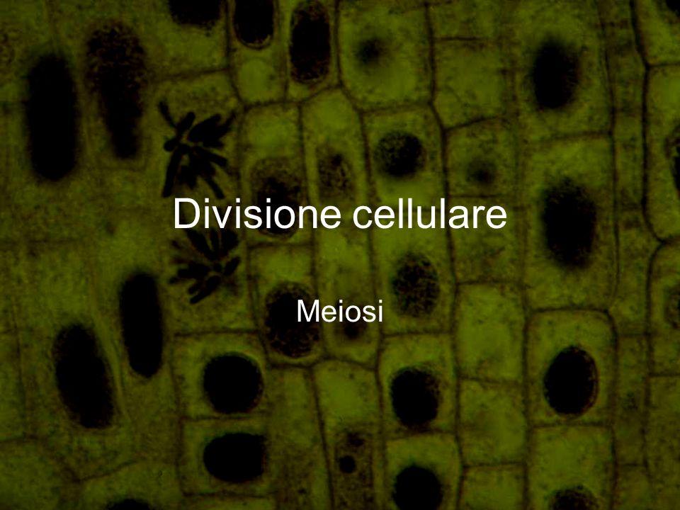 Definizione Divisione cellulare per cui si producono cellule uovo e cellule spermatiche.