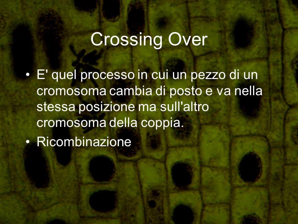 Crossing Over E' quel processo in cui un pezzo di un cromosoma cambia di posto e va nella stessa posizione ma sull'altro cromosoma della coppia. Ricom