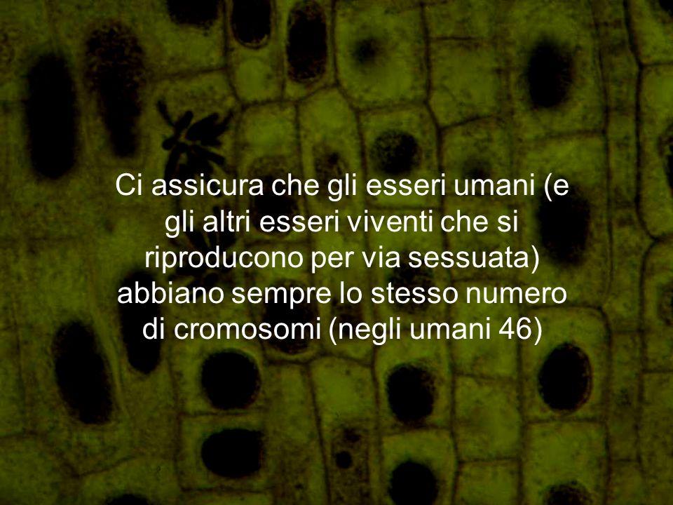 Ci assicura che gli esseri umani (e gli altri esseri viventi che si riproducono per via sessuata) abbiano sempre lo stesso numero di cromosomi (negli