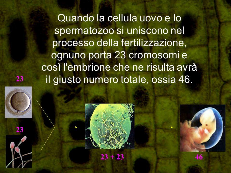 La meiosi inoltre permette una variazione genetica mediante un proceso di mescolamento del DNA durante il processo della divisione.