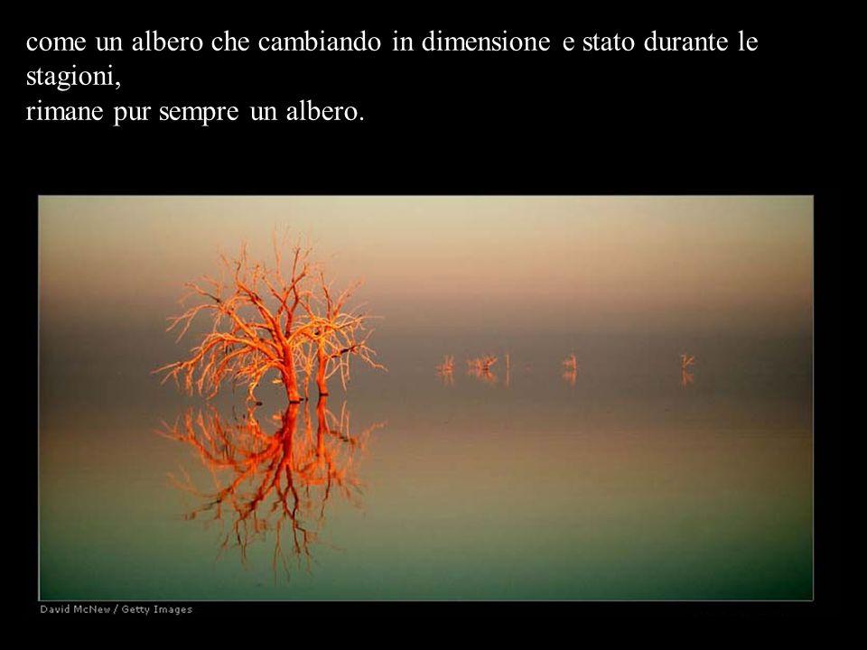 come un albero che cambiando in dimensione e stato durante le stagioni, rimane pur sempre un albero.