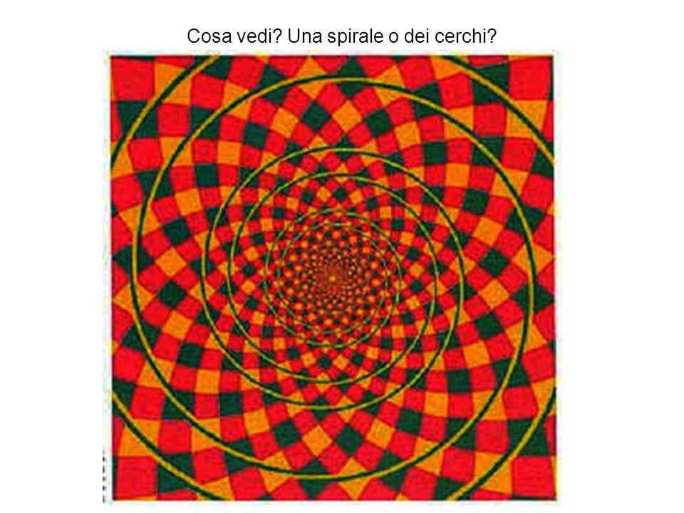 Cosa vedi? Una spirale o dei cerchi?