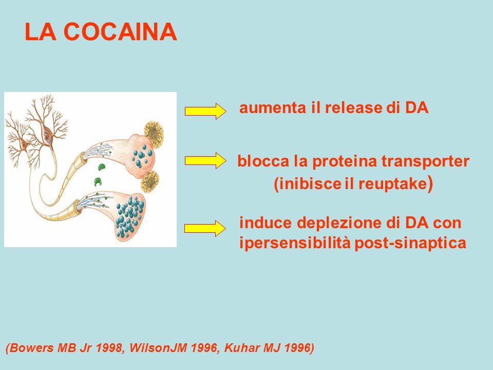 LA COCAINA aumenta il release di DA blocca la proteina transporter (inibisce il reuptake ) induce deplezione di DA con ipersensibilità post-sinaptica