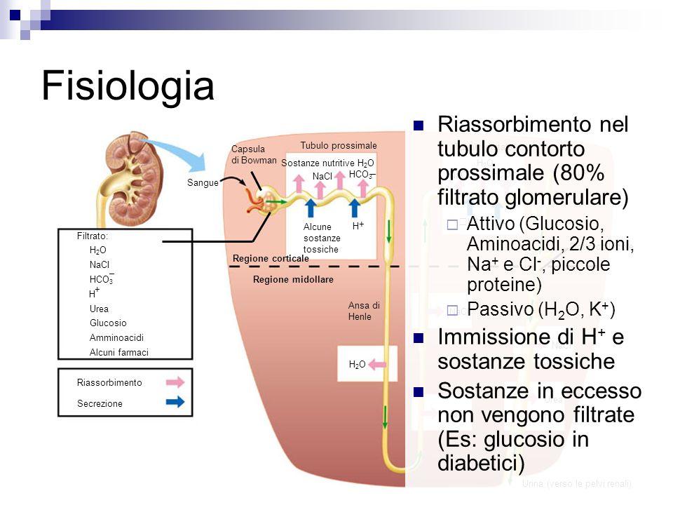Sangue Capsula di Bowman Tubulo prossimale Tubulo distale NaCI – HCO 3 Sostanze nutritive H 2 O Alcune sostanze tossiche + H Regione corticale NaCI – HCO 3 H2OH2O + H + K Dotto collettore Ansa di Henle NaCI Urea H2OH2O H2OH2O Urina (verso le pelvi renali) Regione midollare Filtrato: H 2 O NaCI HCO 3 H Urea Glucosio Amminoacidi Alcuni farmaci + – Riassorbimento Secrezione Fisiologia Riassorbimento nel tubulo contorto prossimale (80% filtrato glomerulare) Attivo (Glucosio, Aminoacidi, 2/3 ioni, Na + e Cl -, piccole proteine) Passivo (H 2 O, K + ) Immissione di H + e sostanze tossiche Sostanze in eccesso non vengono filtrate (Es: glucosio in diabetici)