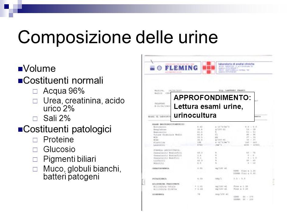 Composizione delle urine Volume Costituenti normali Acqua 96% Urea, creatinina, acido urico 2% Sali 2% Costituenti patologici Proteine Glucosio Pigmenti biliari Muco, globuli bianchi, batteri patogeni APPROFONDIMENTO: Lettura esami urine, urinocultura