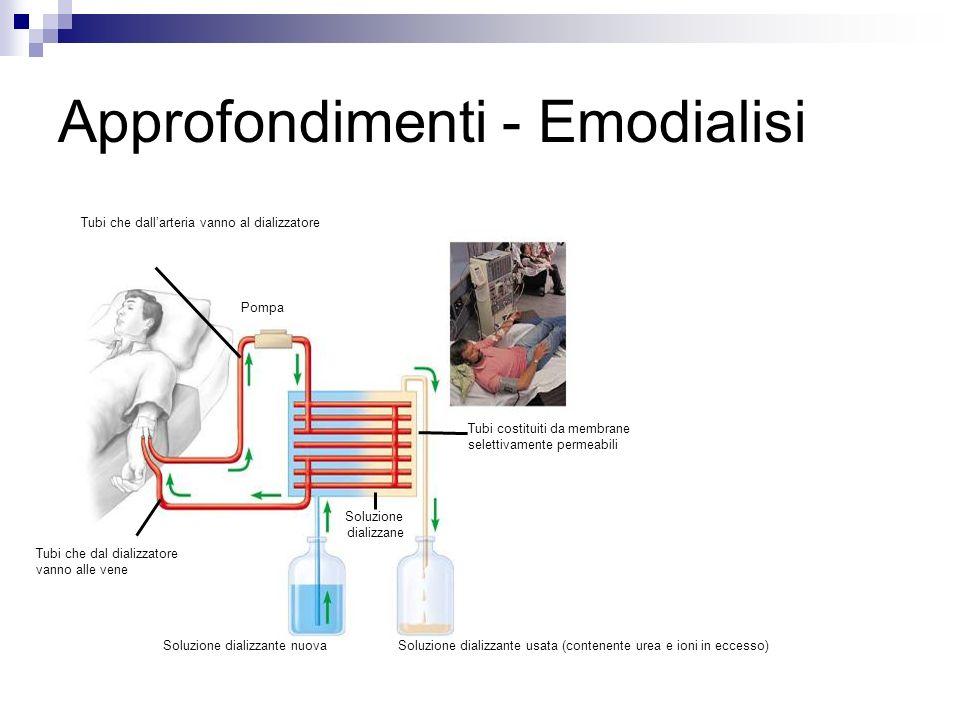 Tubi che dallarteria vanno al dializzatore Soluzione dializzane Soluzione dializzante nuovaSoluzione dializzante usata (contenente urea e ioni in eccesso) Tubi costituiti da membrane selettivamente permeabili Pompa Tubi che dal dializzatore vanno alle vene Approfondimenti - Emodialisi