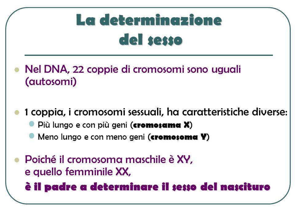 La determinazione del sesso Nel DNA, 22 coppie di cromosomi sono uguali (autosomi) 1 coppia, i cromosomi sessuali, ha caratteristiche diverse: cromosa