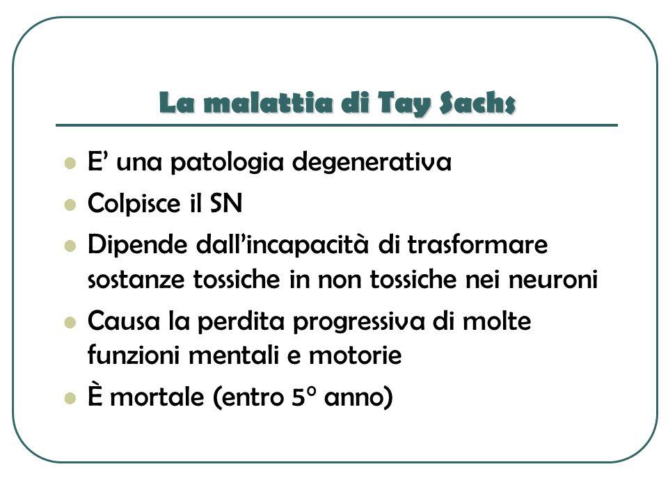 La malattia di Tay Sachs E una patologia degenerativa Colpisce il SN Dipende dallincapacità di trasformare sostanze tossiche in non tossiche nei neuro