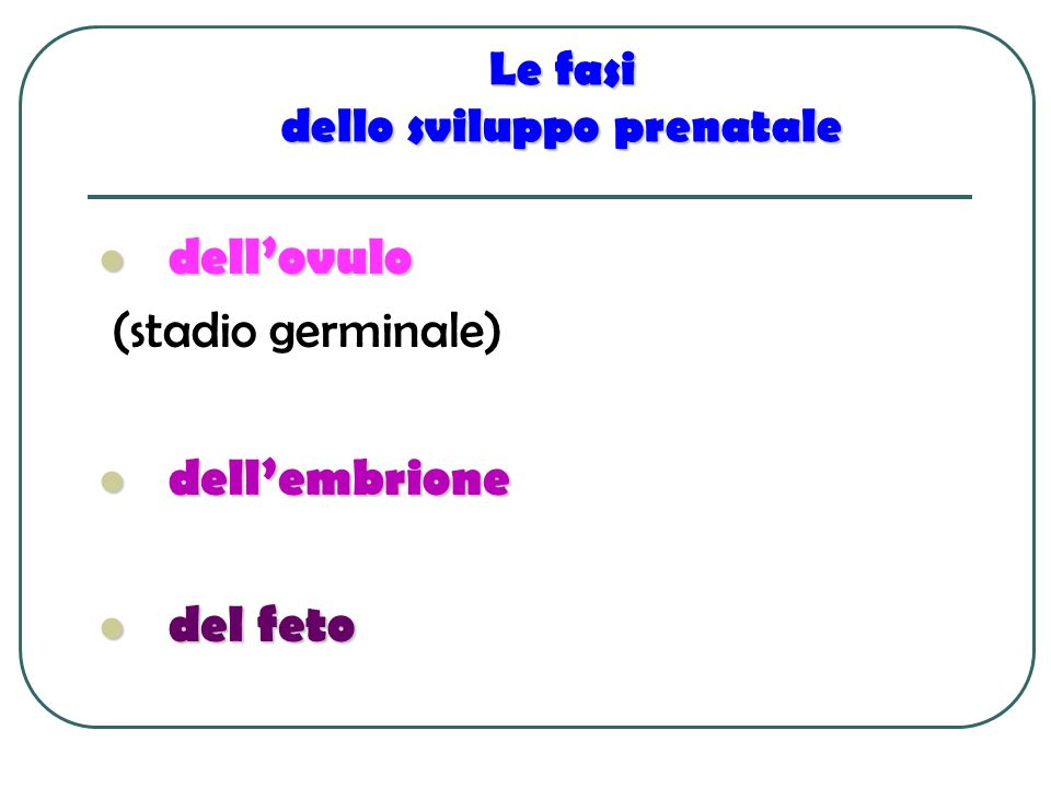 Le fasi dello sviluppo prenatale dellovulo dellovulo (stadio germinale) dellembrione dellembrione del feto del feto