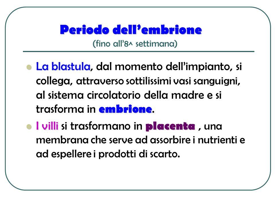 Periodo dellembrione Periodo dellembrione (fino all8^ settimana) La blastula embrione La blastula, dal momento dellimpianto, si collega, attraverso so