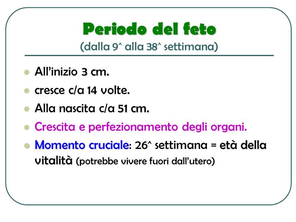 Periodo del feto Periodo del feto (dalla 9 ^ alla 38 ^ settimana) 3 cm. Allinizio 3 cm. cresce c/a 14 volte. 51 cm. Alla nascita c/a 51 cm. Crescita e