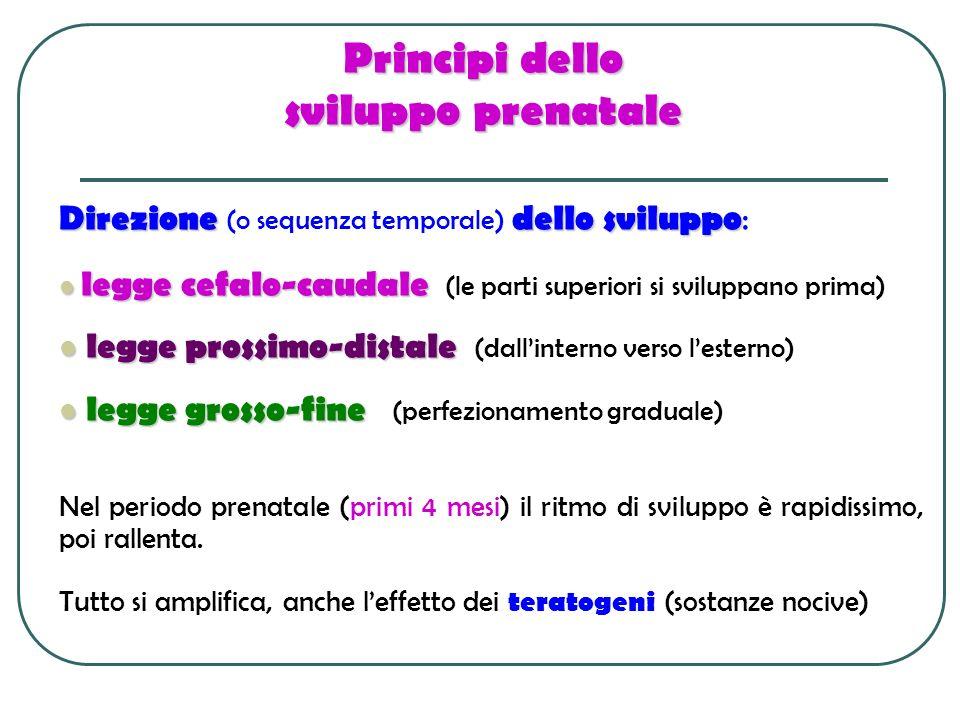 Principi dello sviluppo prenatale Direzionedello sviluppo Direzione (o sequenza temporale) dello sviluppo : legge cefalo-caudale legge cefalo-caudale