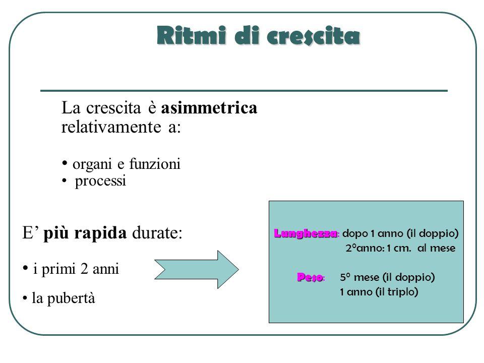 Ritmi di crescita La crescita è asimmetrica relativamente a: organi e funzioni processi E più rapida durate: i primi 2 anni la pubertà ) Lunghezza Lun
