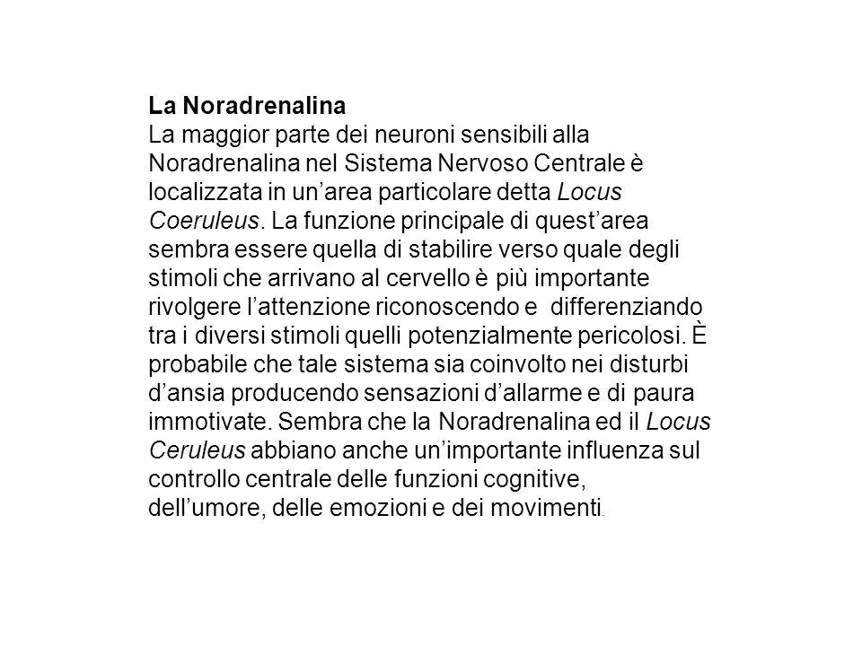 La Noradrenalina La maggior parte dei neuroni sensibili alla Noradrenalina nel Sistema Nervoso Centrale è localizzata in unarea particolare detta Locu