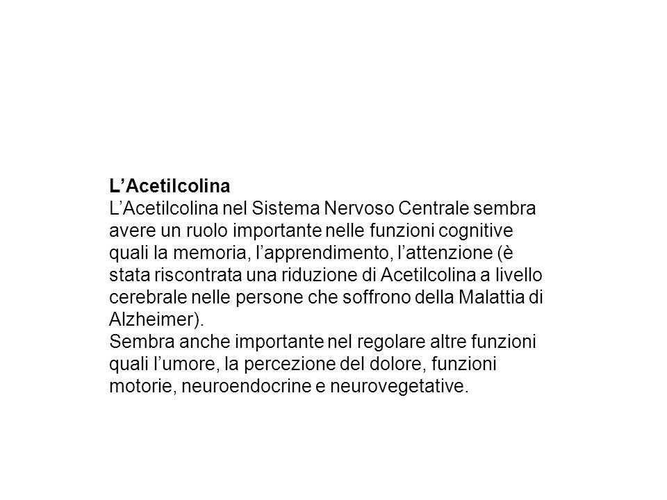LAcetilcolina LAcetilcolina nel Sistema Nervoso Centrale sembra avere un ruolo importante nelle funzioni cognitive quali la memoria, lapprendimento, l