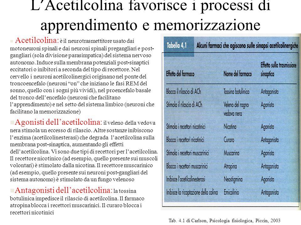 L Acetilcolina favorisce i processi di apprendimento e memorizzazione n Acetilcolina: è il neurotrasmettitore usato dai motoneuroni spinali e dai neur