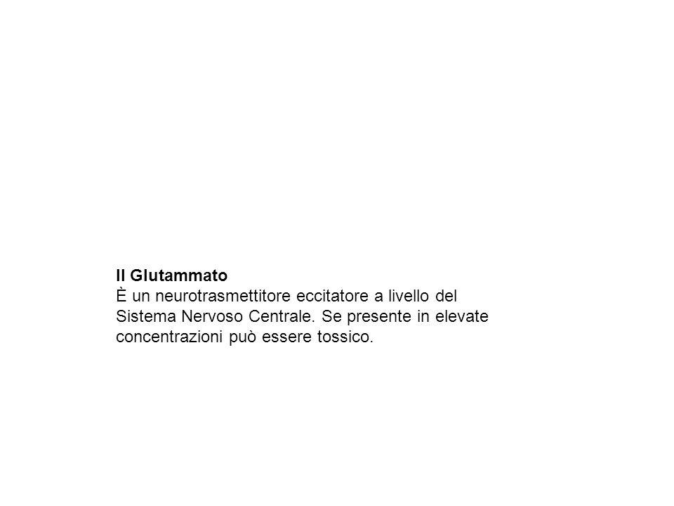 Il Glutammato È un neurotrasmettitore eccitatore a livello del Sistema Nervoso Centrale. Se presente in elevate concentrazioni può essere tossico.