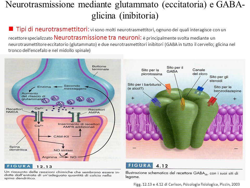 Neurotrasmissione mediante glutammato (eccitatoria) e GABA- glicina (inibitoria) Figg. 12.13 e 4.12 di Carlson, Psicologia fisiologica, Piccin, 2003 n