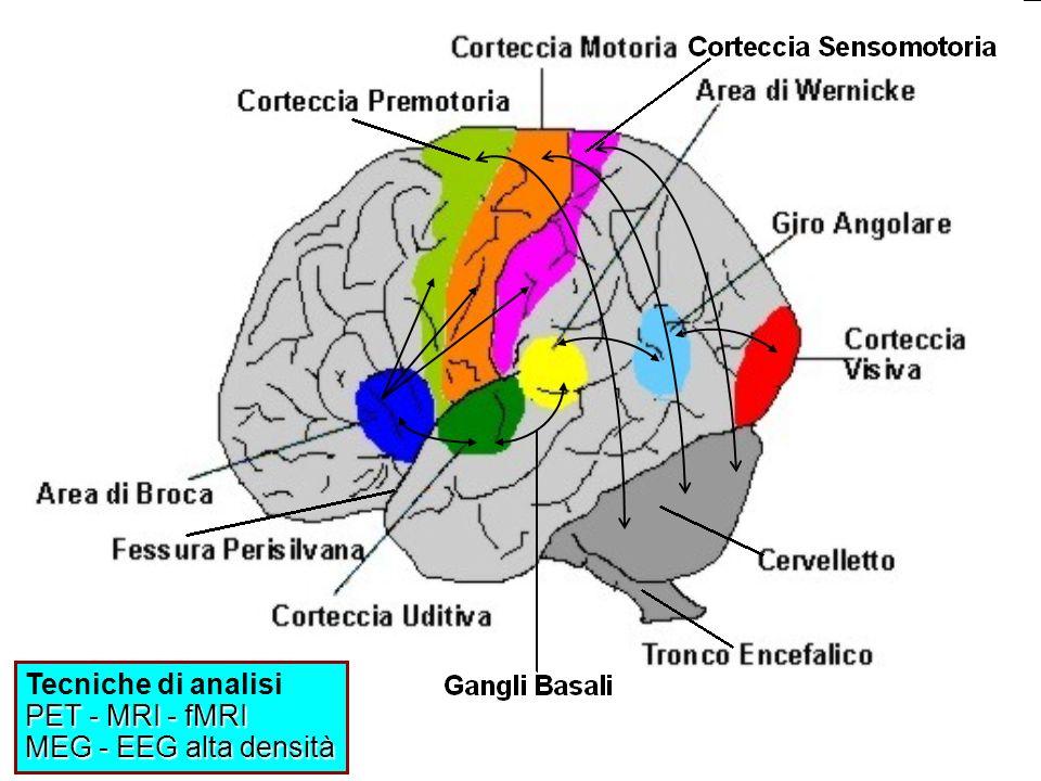 23.16 La corteccia cerebrale è un mosaico di regioni specializzate che interagiscono Lintricato circuito neuronale della corteccia cerebrale dà origine alle caratteristiche umane più peculiari: la logica e le capacità matematiche, labilità linguistica, limmaginazione, il talento artistico e la personalità.