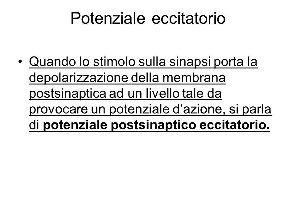 Potenziale eccitatorio Quando lo stimolo sulla sinapsi porta la depolarizzazione della membrana postsinaptica ad un livello tale da provocare un poten