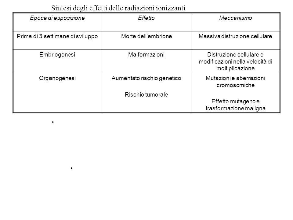 Sintesi degli effetti delle radiazioni ionizzanti Epoca di esposizioneEffettoMeccanismo Prima di 3 settimane di sviluppoMorte dellembrioneMassiva dist