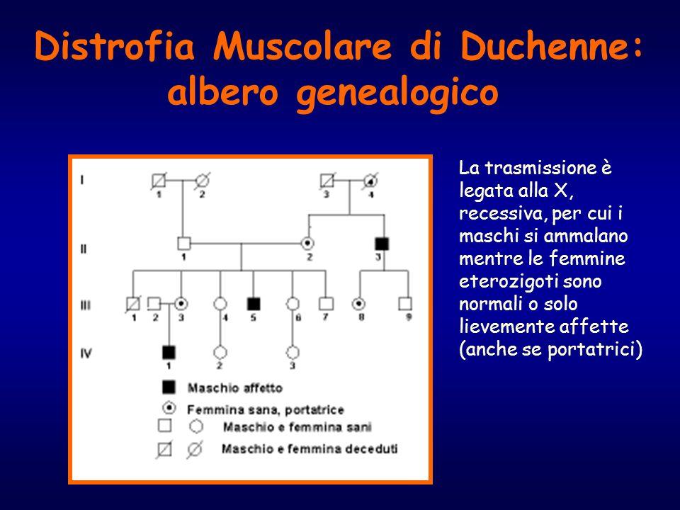 Distrofia Muscolare di Duchenne: albero genealogico La trasmissione è legata alla X, recessiva, per cui i maschi si ammalano mentre le femmine eterozi