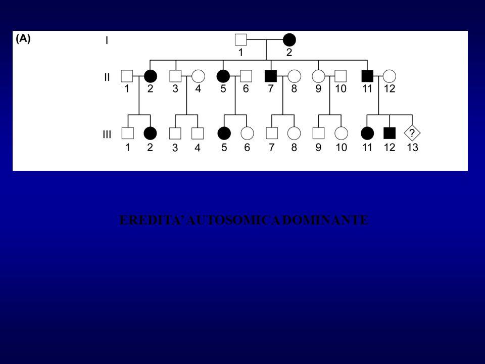 CHARCOT- MARIE TOOTH TIPO 1 1q2 RETINITE PIGMENTOSA 3q MALATTIE DI HUNTINGTON 4pter-p16.3 ATROFIA MUSCOLARE SPINALE 5q11.2-q13.3 SCHIZOFRENIA 5q11-q13 EPILESSIA MIOCLONICA GIOVANILE 6p ATASSIA SPINOCEREBELLARE 6p24-p21.3 SCLEROSI TUBEROSA (TSC 1) 9q34 DISTONIA DI TORSIONE 9q32-q34 SCLEROSI TUBEROSA (TSC 2) 11q MANIA DI PRESSIONE TIPO 1- DEPRESSIONE 11p15.5 NEUROFIBROMATOSI TIPO 1 17q11.2 CHARCOT MARIE TOOTH TIPO 2 17p13.1-q12 POLINEUROPATIA AMILOIDOTICA (FAP) 18q11.2-q12.1 IPERTERMIA MALIGNA 19q12-q13.2 DISTROFIA MIOTONICA 19q13.2-13.3 SINDROME DI GERSTMANN-STRAUSSLER 20pter-p12 CONVULSIONI NEONATALI BENIGNE 20q MALATTIA FAMILIARE DI ALZHEIMER 21pter-q21 NEUROFIBROMATOSI TIPO 2 22q11-q13.1 MALATTIE NEUROLOGICHE EREDITARIE AUTOSOMICHE DOMINANTI