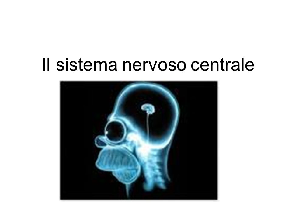 Il telencefalo n Il telencefalo: comprende la corteccia cerebrale, il sistema limbico e i gangli della base n La corteccia cerebrale: è suddivisa nei lobi frontali (movimento, piani dazione e recupero di tracce mnestiche deboli) come anche nei lobi parietale, temporale e occipitale (percezione e memoria) n Il sistema limbico: comprende la corteccia limbica, lippocampo e lamigdala (emozione, motivazione e apprendimento) n Gangli della base: Sono un aggregazione di nuclei sottocorticali localizzati nel proencefalo al disotto della porzione anteriore dei ventricoli laterali.