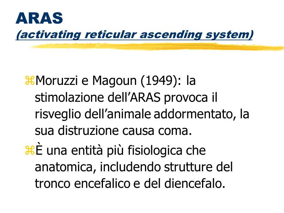 ARAS (activating reticular ascending system) zMoruzzi e Magoun (1949): la stimolazione dellARAS provoca il risveglio dellanimale addormentato, la sua
