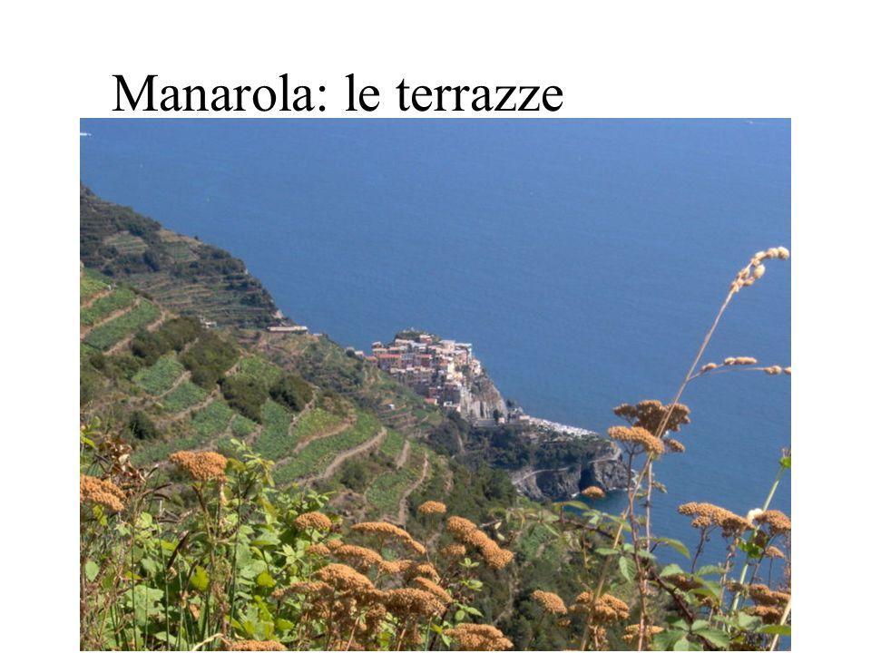 Manarola: le terrazze