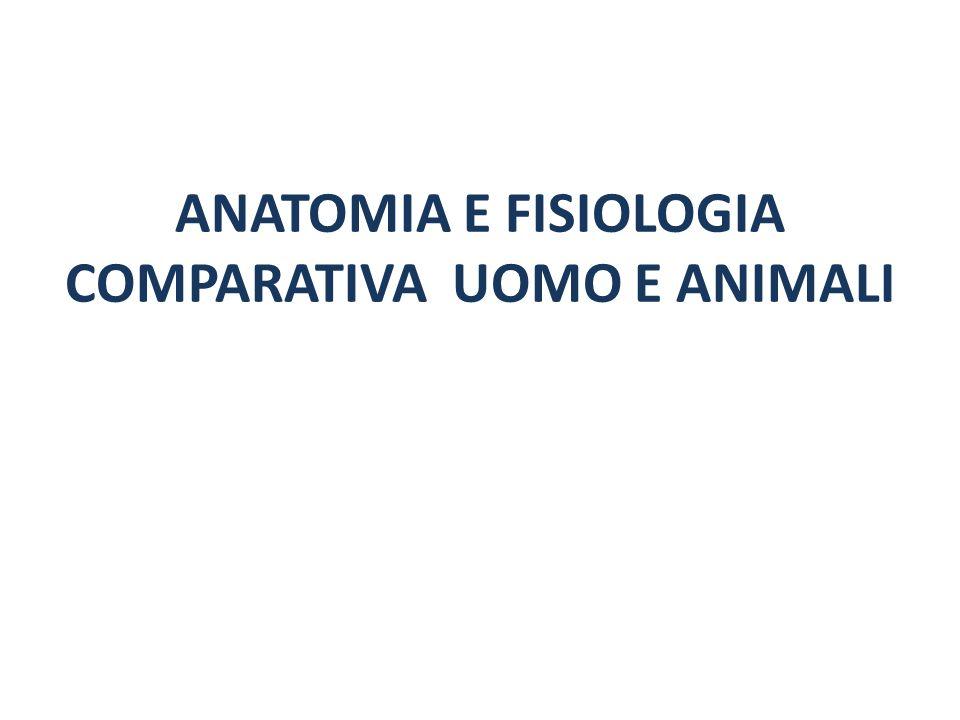ANATOMIA E FISIOLOGIA COMPARATIVA UOMO E ANIMALI