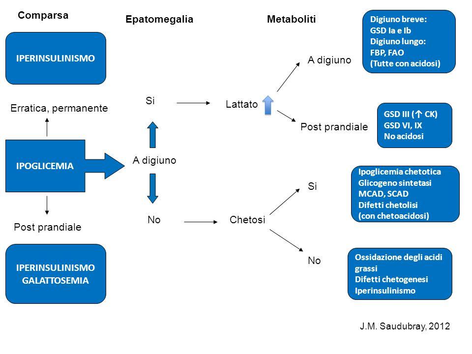 IPERINSULINISMO Comparsa Erratica, permanente IPOGLICEMIA Post prandiale IPERINSULINISMO GALATTOSEMIA Epatomegalia A digiuno Si No Metaboliti Lattato