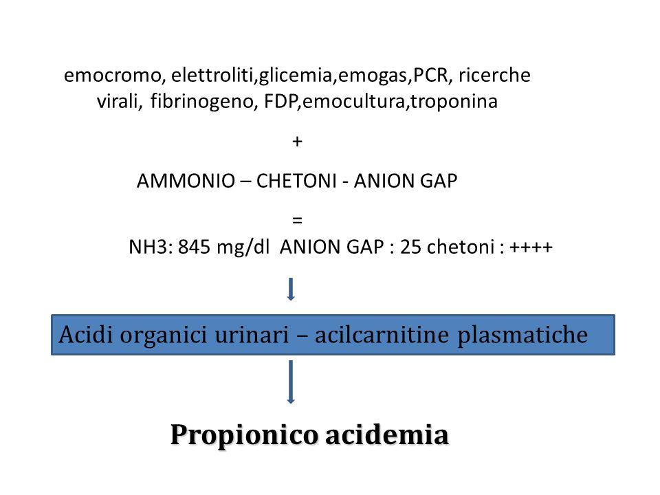 emocromo, elettroliti,glicemia,emogas,PCR, ricerche virali, fibrinogeno, FDP,emocultura,troponina + AMMONIO – CHETONI - ANION GAP = NH3: 845 mg/dl ANI