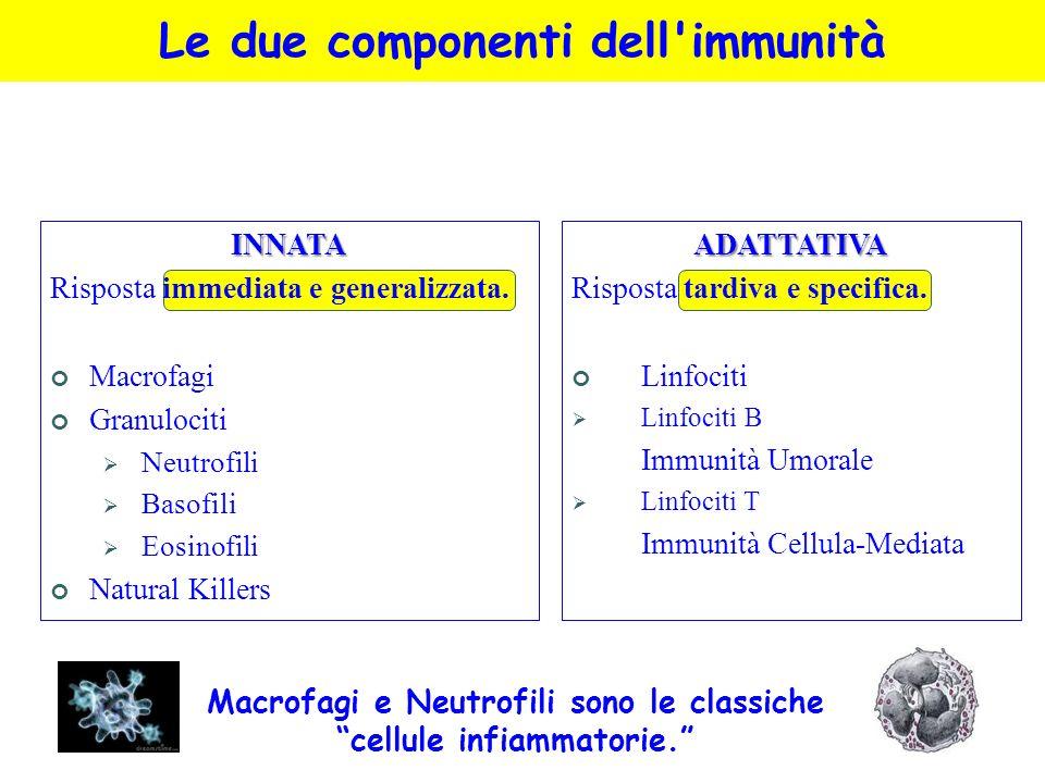 Le due componenti dell'immunitàINNATA Risposta immediata e generalizzata. Macrofagi Granulociti Neutrofili Basofili Eosinofili Natural KillersADATTATI