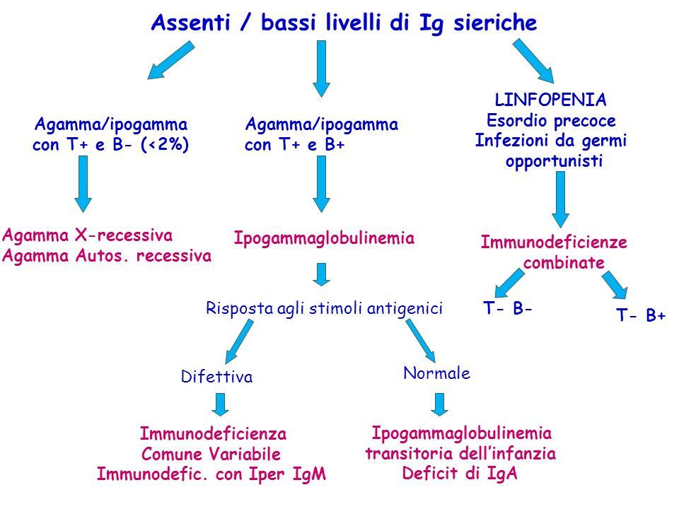 Assenti / bassi livelli di Ig sieriche Immunodeficienza Comune Variabile Immunodefic. con Iper IgM Agamma/ipogamma con T+ e B- (<2%) Agamma X-recessiv