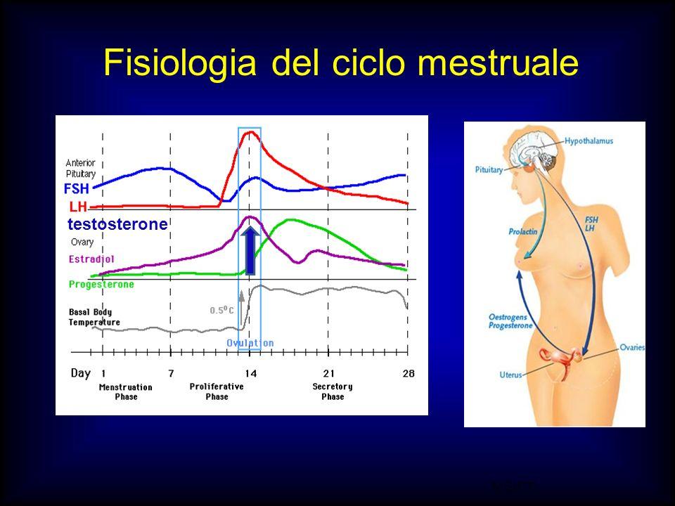 M.SUTTI Fisiologia del ciclo mestruale testosterone