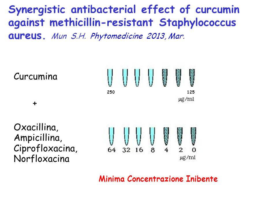 Minima Concentrazione Inibente Synergistic antibacterial effect of curcumin against methicillin-resistant Staphylococcus aureus. Mun S.H. Phytomedicin