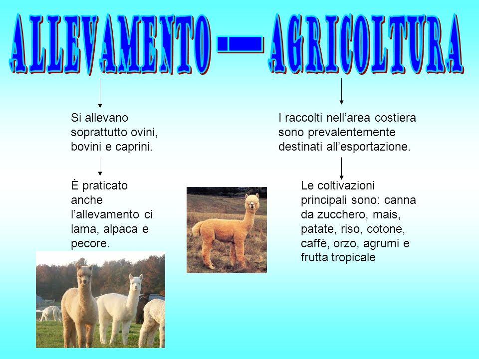 Si allevano soprattutto ovini, bovini e caprini.