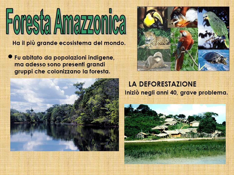 Ha il più grande ecosistema del mondo. Fu abitato da popolazioni indigene, ma adesso sono presenti grandi gruppi che colonizzano la foresta. LA DEFORE