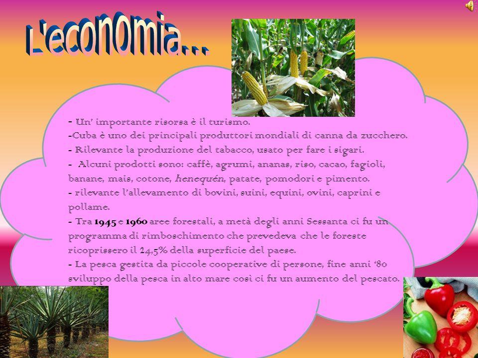 - Un importante risorsa è il turismo. -Cuba è uno dei principali produttori mondiali di canna da zucchero. - Rilevante la produzione del tabacco, usat