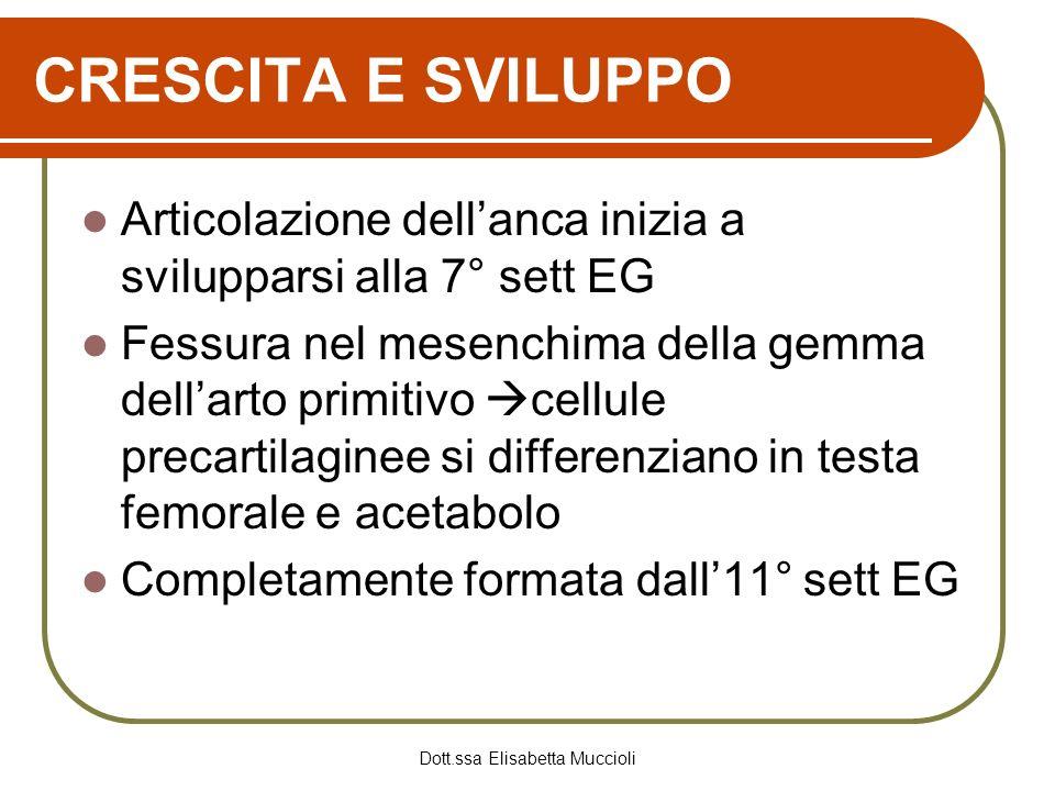 Dott.ssa Elisabetta Muccioli CRESCITA E SVILUPPO Articolazione dellanca inizia a svilupparsi alla 7° sett EG Fessura nel mesenchima della gemma dellar