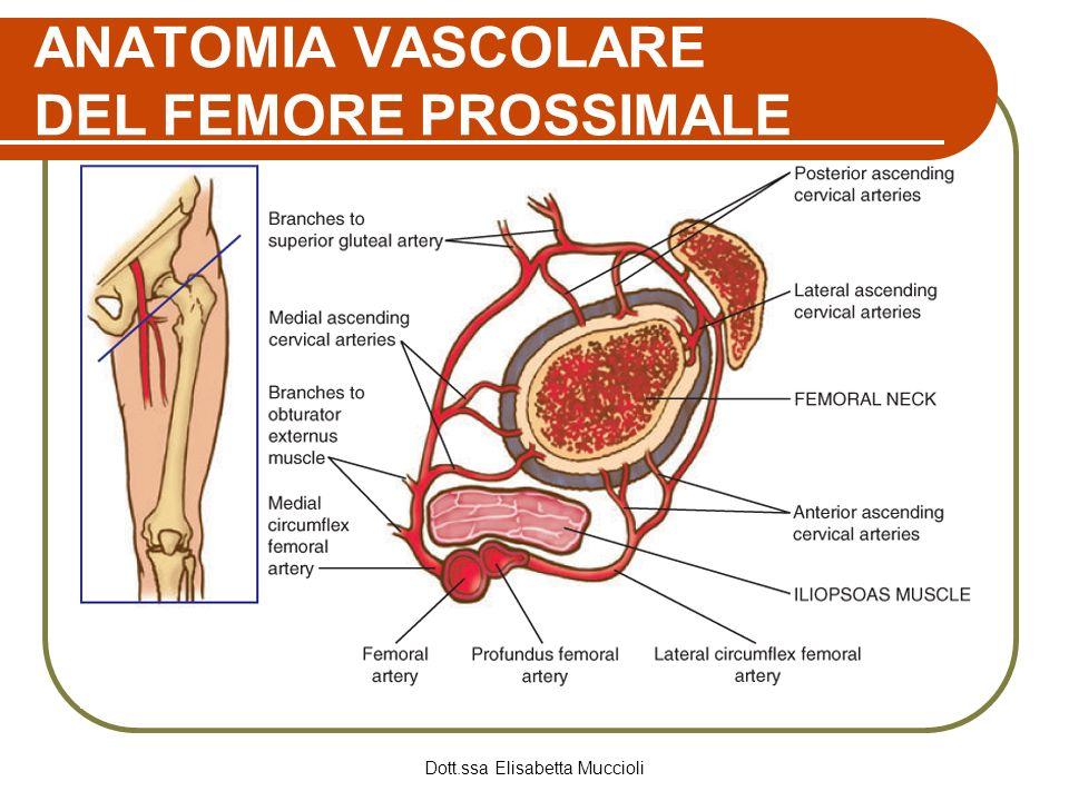 Dott.ssa Elisabetta Muccioli ANATOMIA VASCOLARE DEL FEMORE PROSSIMALE