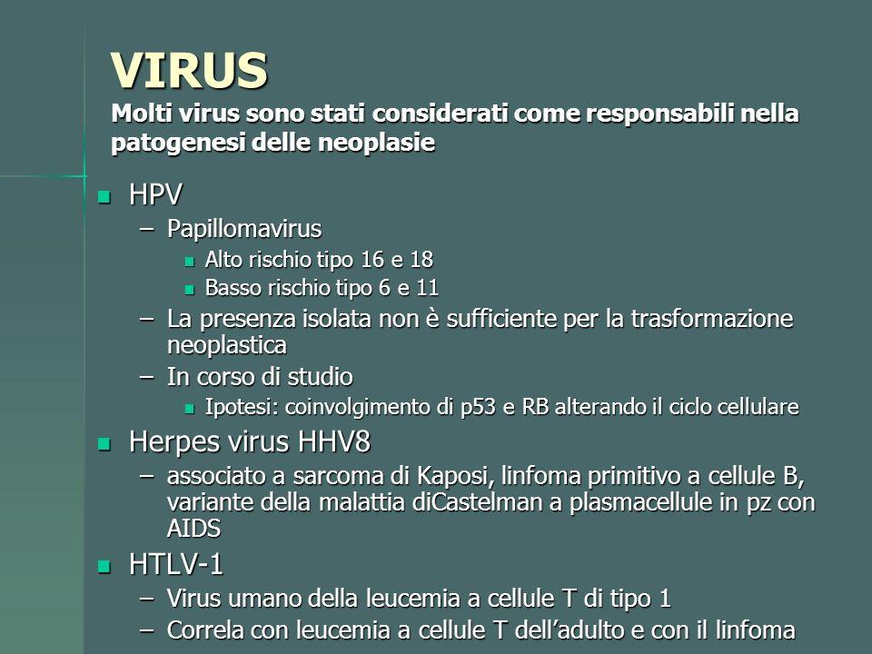 Dott.ssa E. Muccioli VIRUS Molti virus sono stati considerati come responsabili nella patogenesi delle neoplasie HPV HPV –Papillomavirus Alto rischio